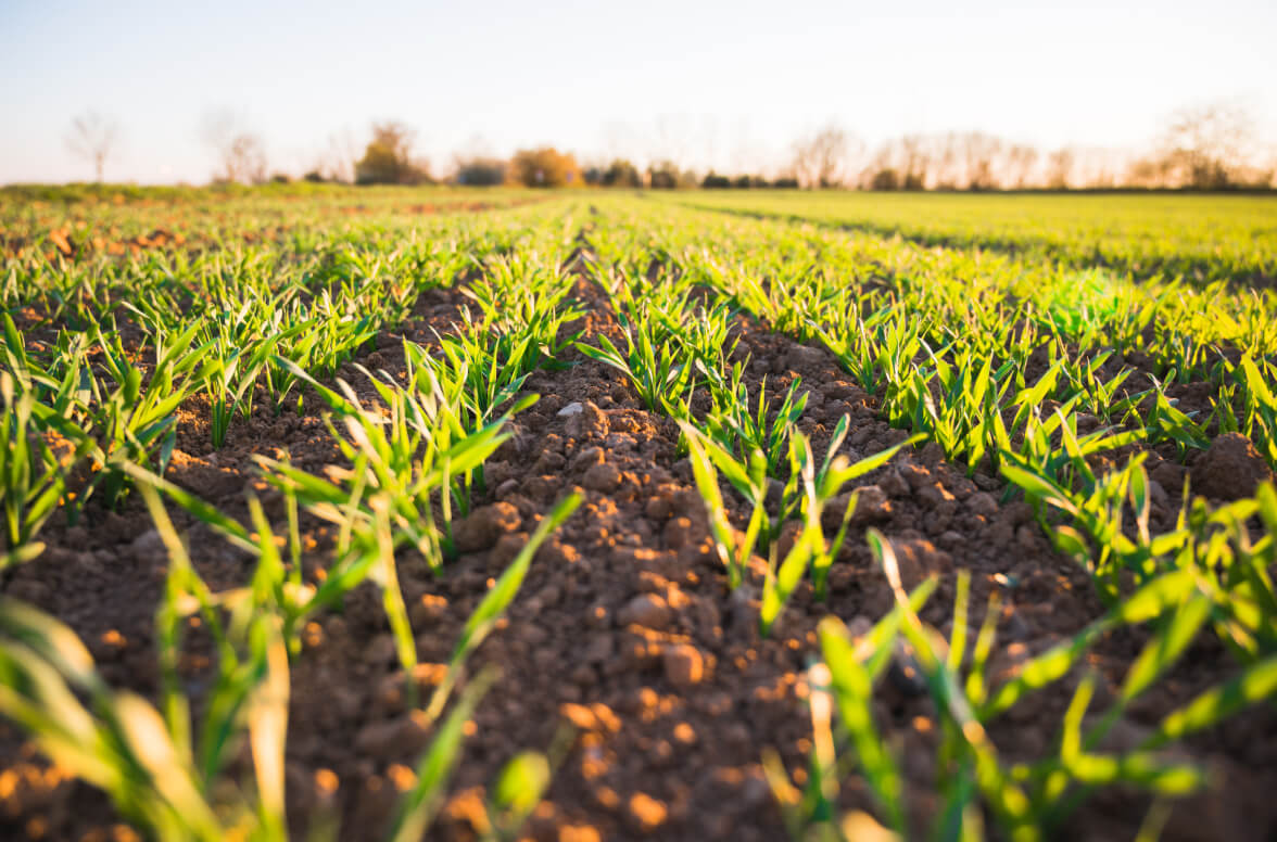 Doing Business in Agriculture and Food